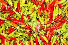 Green and red chili. Royalty Free Stock Photo