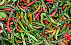 Green And Red Chillies Stock Image
