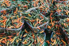 Green and red chillies in plastic boxes Royalty Free Stock Photos