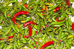 Green and red chillies spice plants. Green and red chillies in a fruit and vegetable market Royalty Free Stock Image