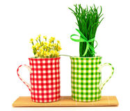 Green and red cups with spring flowers and grass with ribbon on Stock Images
