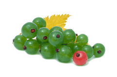 Green and Red Currant Stock Photography