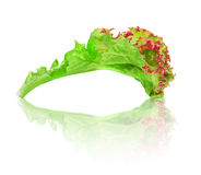 Green with red edging lettuce with reflection Stock Images