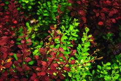 Green and red foliage stock photos