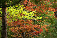 Green and red forest Royalty Free Stock Image