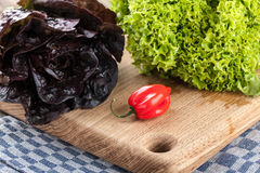 Green, red, fresh lettuce and red pepper Stock Photography