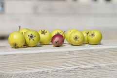 Green and red fruits on wooden background. The fruits of wild apple and pear royalty free stock images