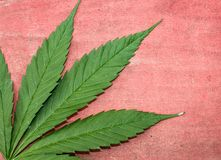 Green and red ganja natural horizontal background. Backdrop royalty free stock photo