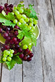 Green and red grape background Stock Photography