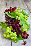 Green and red grape Stock Images