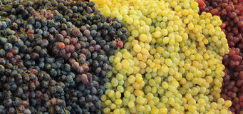 Green and red grapes. On photo green and red grapes Royalty Free Stock Images