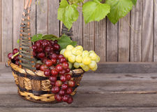 Green and Red Grapes Stock Image
