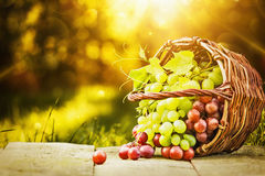 Green and red grapes. In solar beams Royalty Free Stock Photo