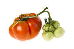 Green and red heirloom tomatoes. Large ripe red heirloom tomato in the same bunch as three small unripe green ones.  On white Royalty Free Stock Images