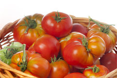 Green and red heirloom tomatoes Royalty Free Stock Images