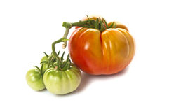 Green and red heirloom tomatoes Stock Photos
