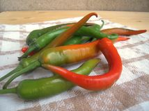 Green and red hot chili pepper on a kitchen towel Stock Image