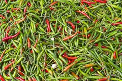 Green and red hot chili peppers at the market. Royalty Free Stock Image