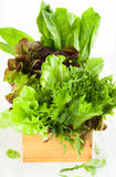 Fresh lettuces Royalty Free Stock Photo