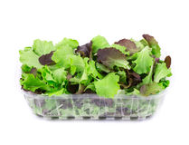 Green and red leaf of lettuce in box. Stock Image