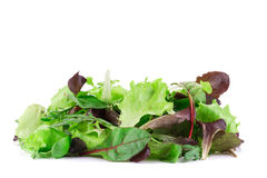 Green and red leaf of lettuce close up. Stock Photography