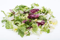 Green and red leaf of lettuce. Isolated on a white background Stock Image