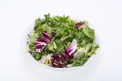Green and red leaf of lettuce Stock Photos