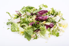 Green and red leaf of lettuce Stock Image