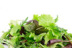 Green and red leaf of lettuce. Royalty Free Stock Photo