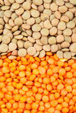Green and red lentils heap Stock Photography
