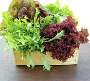 Green and red lettuce in box Stock Photos