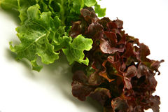 Green and red lettuce closeup Royalty Free Stock Image