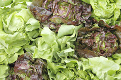 Green and red lettuce display. Market display of green and red leaf lettuce Royalty Free Stock Images