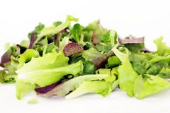 Green and red lettuce leaves Royalty Free Stock Image