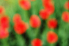 Green and red natural background Royalty Free Stock Photography