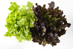 Green and red oak lettuce stock images