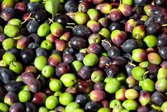 Green and red olives Royalty Free Stock Photos