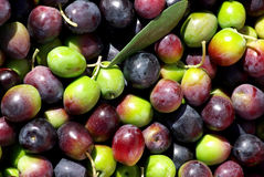 Green and red olives Royalty Free Stock Images