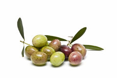 Green and red olives with leaves. Stock Photos
