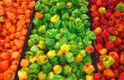 Green, Red And Orange Peppers Royalty Free Stock Image