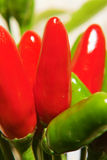 Green and red peppers closeup Stock Image