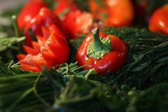 Green and red peppers, dill, parsley stock photography