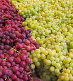 Green and Red Seedless Grapes Royalty Free Stock Image