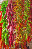 Green and red sharp peppers Stock Image