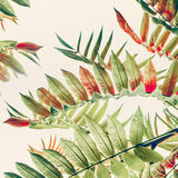 Green red Tropical or  jungle leaves on light pastel background, close up. Nature background Stock Photos