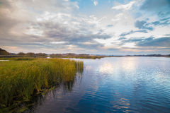 Green reed near water on amazing sky background. At sunrise Royalty Free Stock Photo