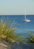 Green reed and ocean.GN. Green reed growing in a sand dune whit ocean and a sailboat in the background.GN stock image