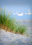 Green reed and ocean.GN. Green reed growing in a sand dune whit ocean and a sailboat in the background.GN stock photos