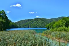 Green reeds and the lake with luminous azure-colored water stock photo