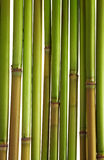 Green reeds Royalty Free Stock Photography